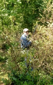 Bill trimming some overgrown bushes.